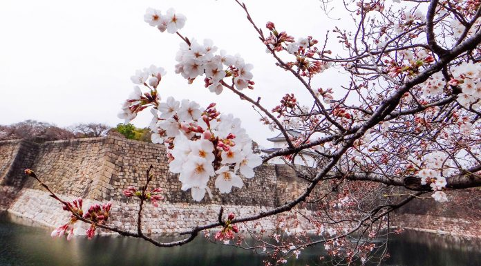 Du lịch Nhật Bản và những điểm đến cuốn hút đáng để bạn khám phá