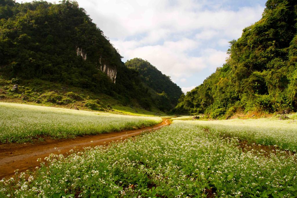 Du lịch tháng 11 - Hoa cải trắng bản Áng sau rừng Thông