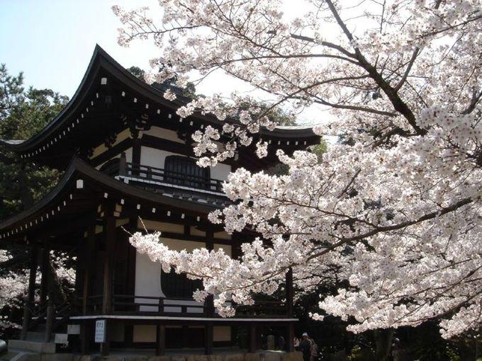 Hoa anh đào ở Vườn Denpoin ở Tokyo