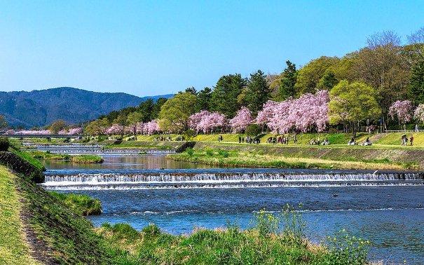 Hoa anh đào ở Sông Takano-Gawa ở Kyoto