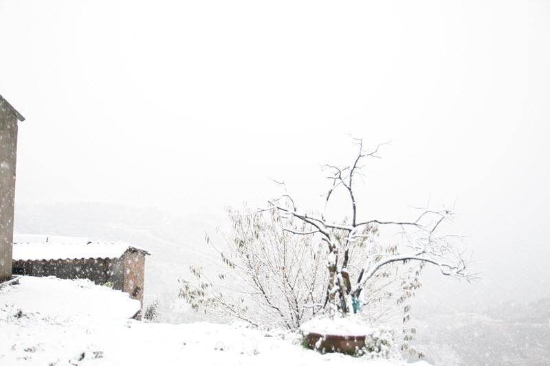 điểm du lịch có tuyết - Tuyết phủ lên từng cành cây ngọn cỏ
