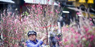 chợ hoa Tết nổi tiếng