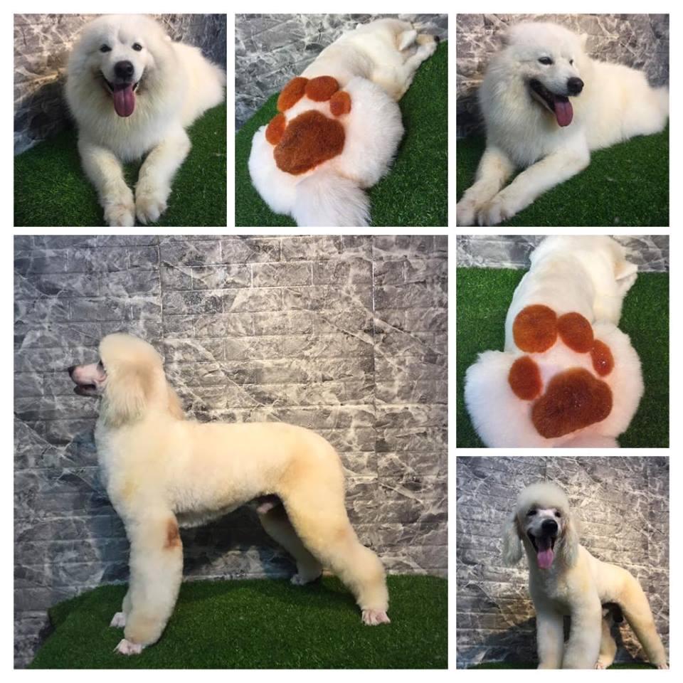 Luffy- nhà của cún cưng - Pet coffee Hà Nội