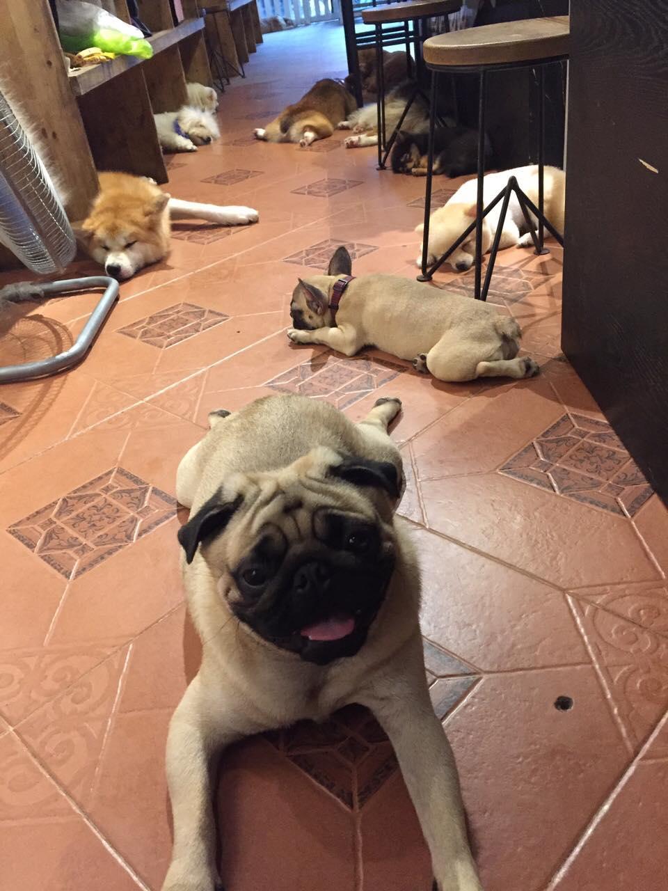 Luffy- Ngôi nhà cún cưng