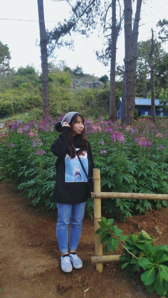 Rừng thông Mộc Châu