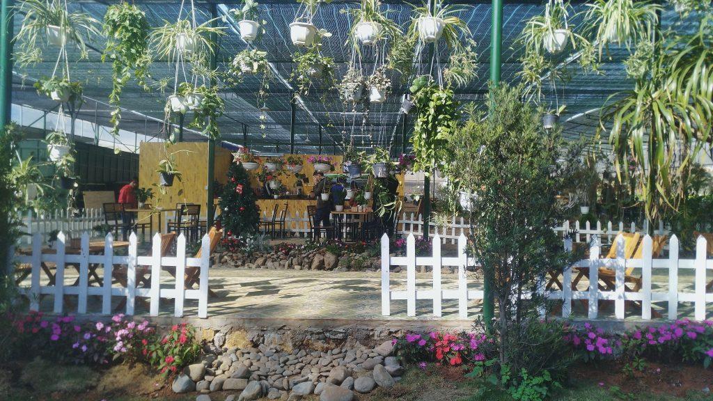 Chimi Farm - du lịch Mộc Châu Tháng 1