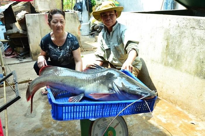 Con cá lăng khổng lồ mà ngư dân đánh bắt được ở sông Sêrêpốk - Ẩm thực Tây Nguyên