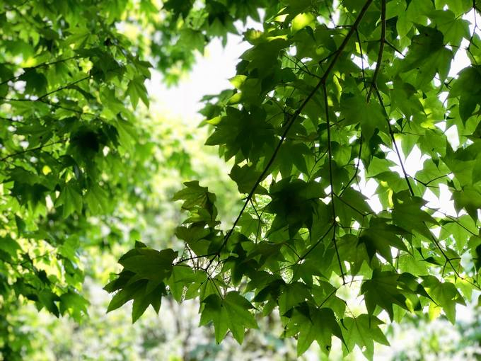 Tả Liên Sơn đẹp tựa như khu rừng cổ tích phủ đầy màu của cỏ cây