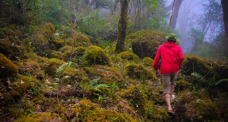 Khung cảnh khu rừng cổ tích có gì đẹp