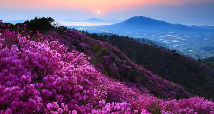 Núi Tả Liên mùa hoa đỗ quyên