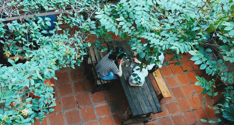 Xoan cafe phủ đầy một màu xanh thiên nhiên