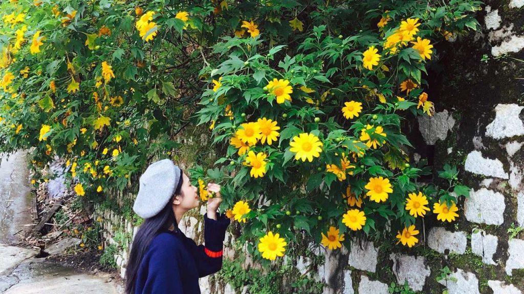 Khi đặt chân đến thành phố Đà Lạt, bạn cũng có thể ngắm nhìn những dải hoa dã quỳ ở các góc nhỏ trên từng con phố. Hoa dã quỳ ở trong thành phố luôn đẹp hơn ở các cung đường nhưng không nhiều bằng.