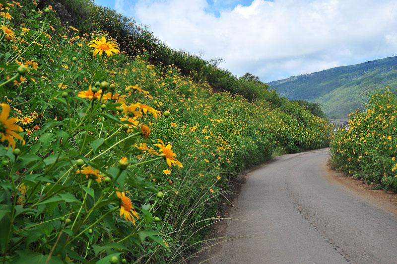 Nếu đi từ Cầu Đất về Đà Lạt, bạn sẽ bắt gặp rất nhiều loài hoa này mọc ở hai ven đường. Không những thế, khi di chuyển trên cung đường này, bạn có thể chiêm ngưỡng đồi chè Cầu Đất xanh ngắt.