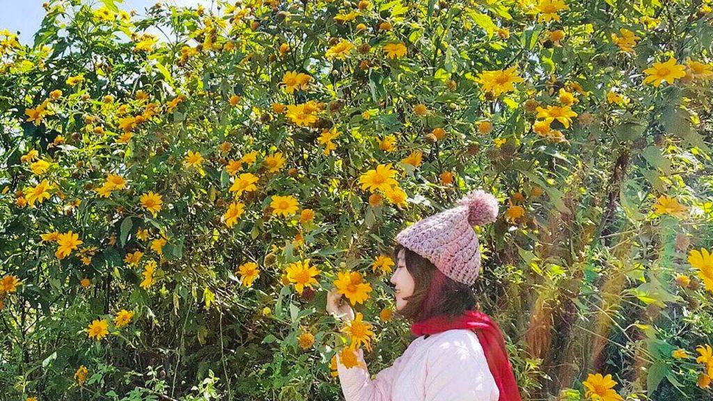 Đây là cung đường chiếm trọn hoa dã quỳ và đẹp nhất. Trên đường từ Đà Lạt đi làng hoa Vạn Thành, bạn sẽ không chỉ chiêm ngưỡng mỗi dã quỳ thôi đâu, còn có rất nhiều loài hoa khác nữa.