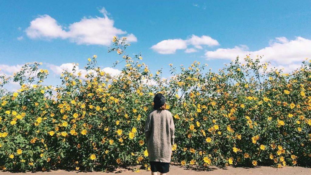 Từ cung đường làng hoa Vạn Thành đến Thác Voi sẽ có rất nhiều hoa dã quỳ trải dài, nở rộ trên cung đường này.