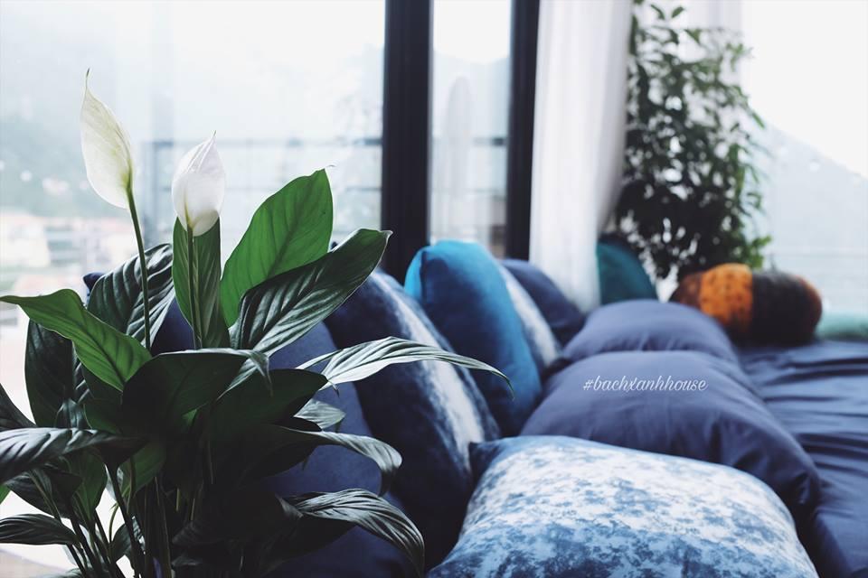 Bách Xanh House - là một homestay Tam Đảo chắc chắn là một không gian lý tưởng để bạn tạm xa thành phố để đến với một không gian lý tưởng.