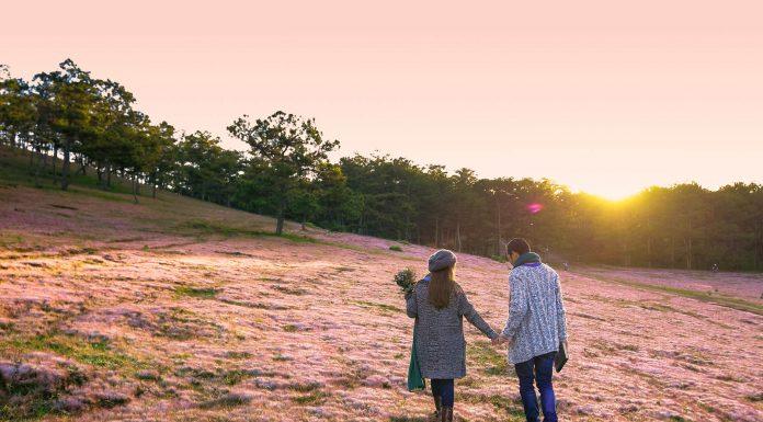 Địa điểm ngắm cỏ hồng Đà Lạt siêu đẹp