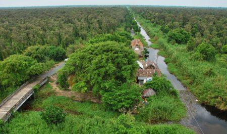 Rừng tràm U Minh (Kiên Giang, Cà Mau)