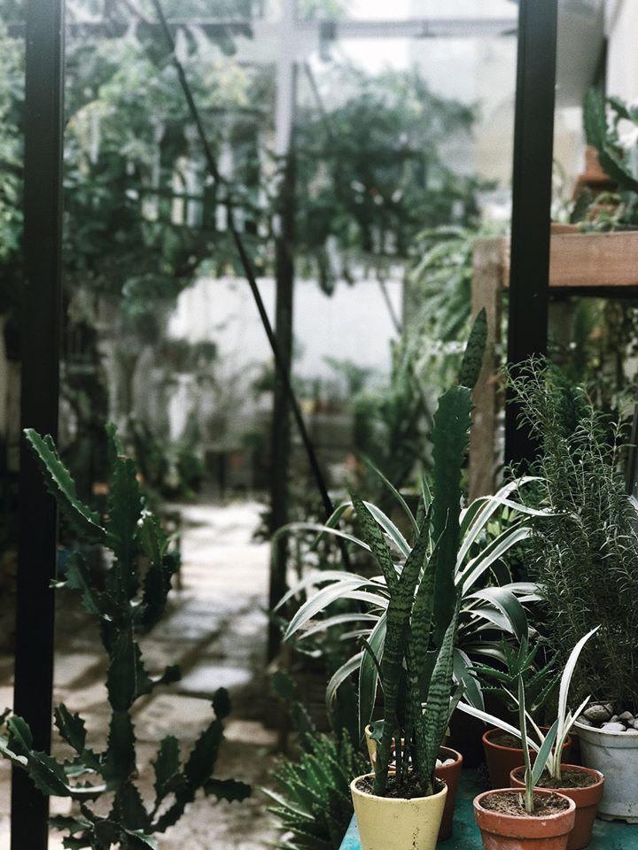 Một góc nhỏ cây lá cho khách của nhà S:House đi dạo sương sương