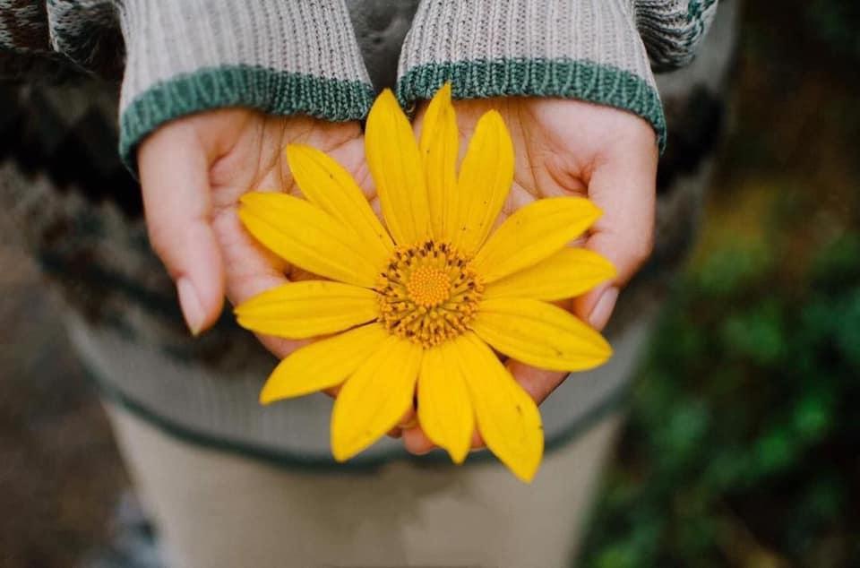 Trong những ngày gần đây, mọi người thường rủ nhau đi ngắm hoa dã quỳ Ba Vì - một loài hoa báo hiệu thu qua, đông đến.