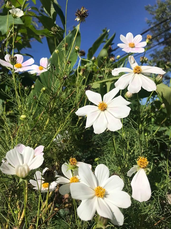 Ngày nắng đẹp, dưới vòm trời tỏa nắng sau khi thức dậy du khách có thể dạo một vòng quanh Magnolia Villa ngắm hoa nở, nghe chim hót líu lo.