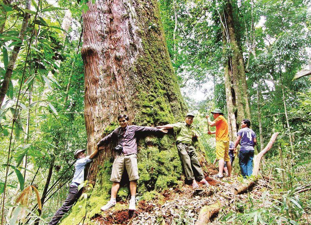 Cùng dang rộng tay để ôm cây di sản