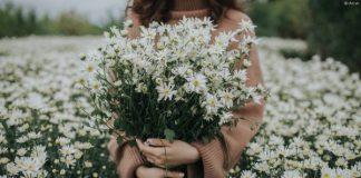 Loài hoa nở đẹp nhất mùa đông