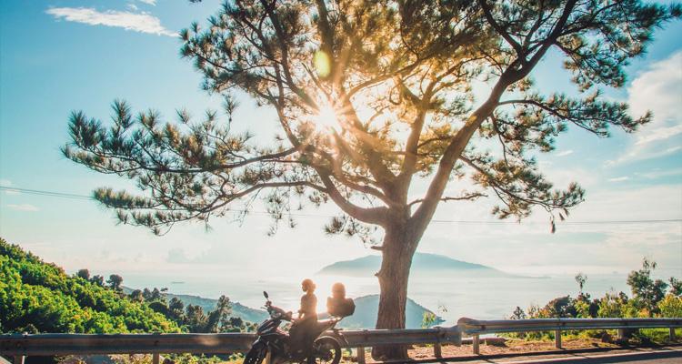 Cây thông trên đèo Hải Vân