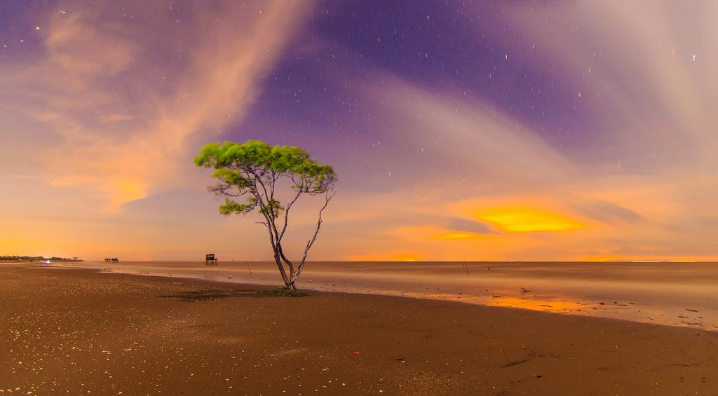 Vẻ đẹp cây cô đơn bãi biển Tân Thành
