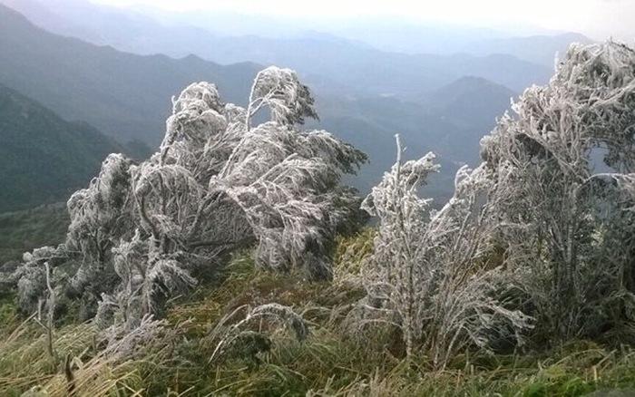 Băng tuyết phủ trắng xóa các cây cối