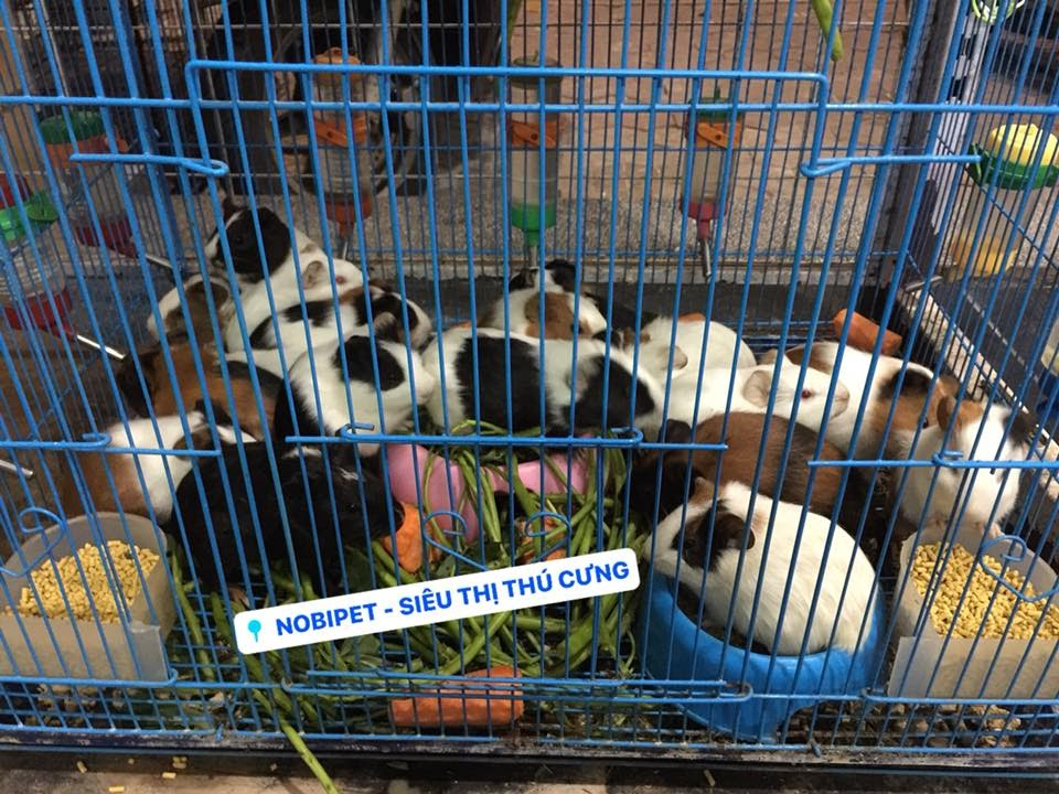 Đợt ni siêu thị mới về mấy con chuột hamster mập ú