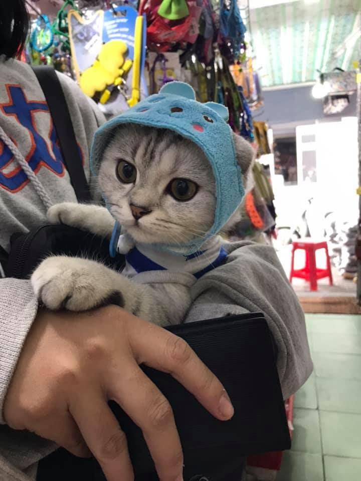 Lạnh quá đi mèo méo meo