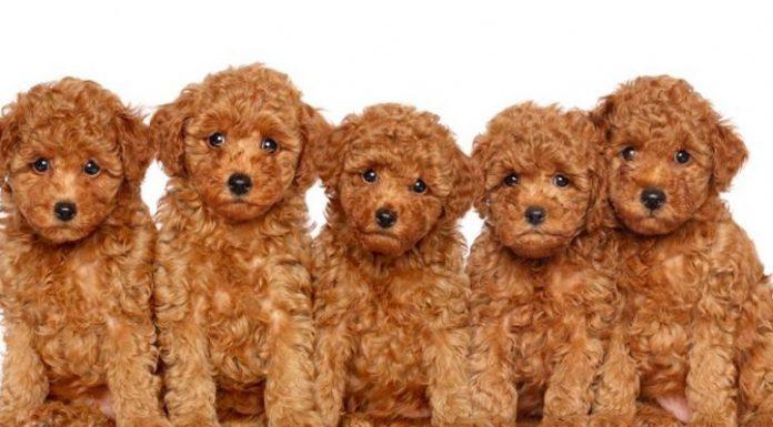 morereviews, Petcity Đà Nẵng, Nobipet, Bobby Pet shop, Kpetmart, Cún Yêu shop, mua thức ăn chó mè Đà Nẵng, Phụ kiện thú cưng Đà Nẵng