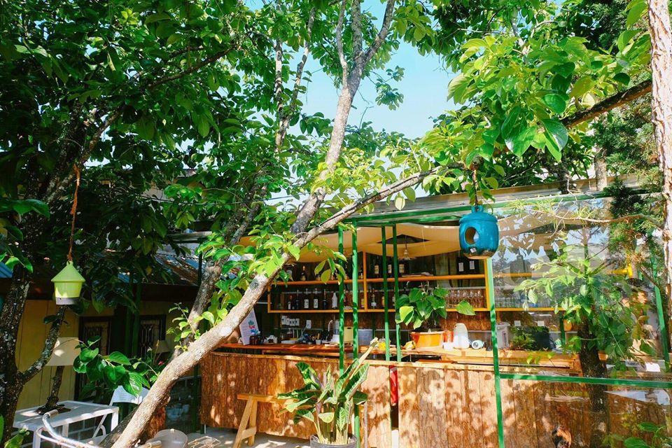 Những tia nắng len lỏi qua một góc quán cà phê nhà Shelter