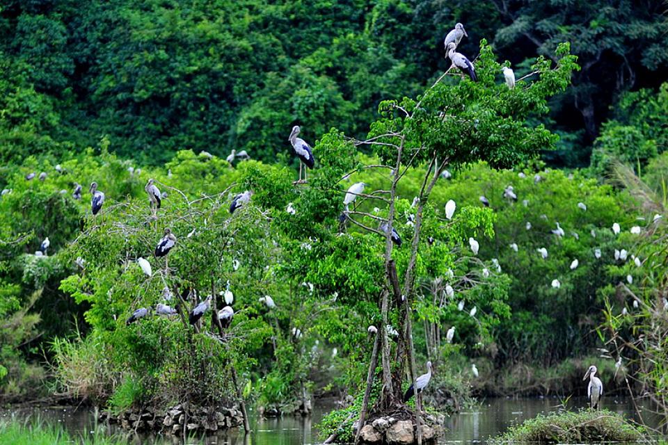 Lạc bước lại động Am Tiên và vườn chim Thung Nham