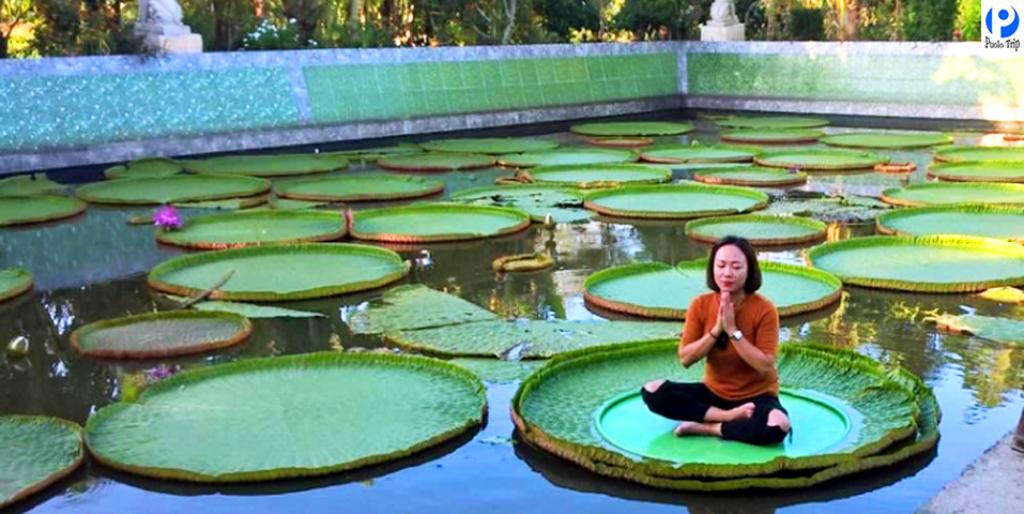 Có rất nhiều du khách check in trên lá sen khổng lồ của chùa Phước Kiển