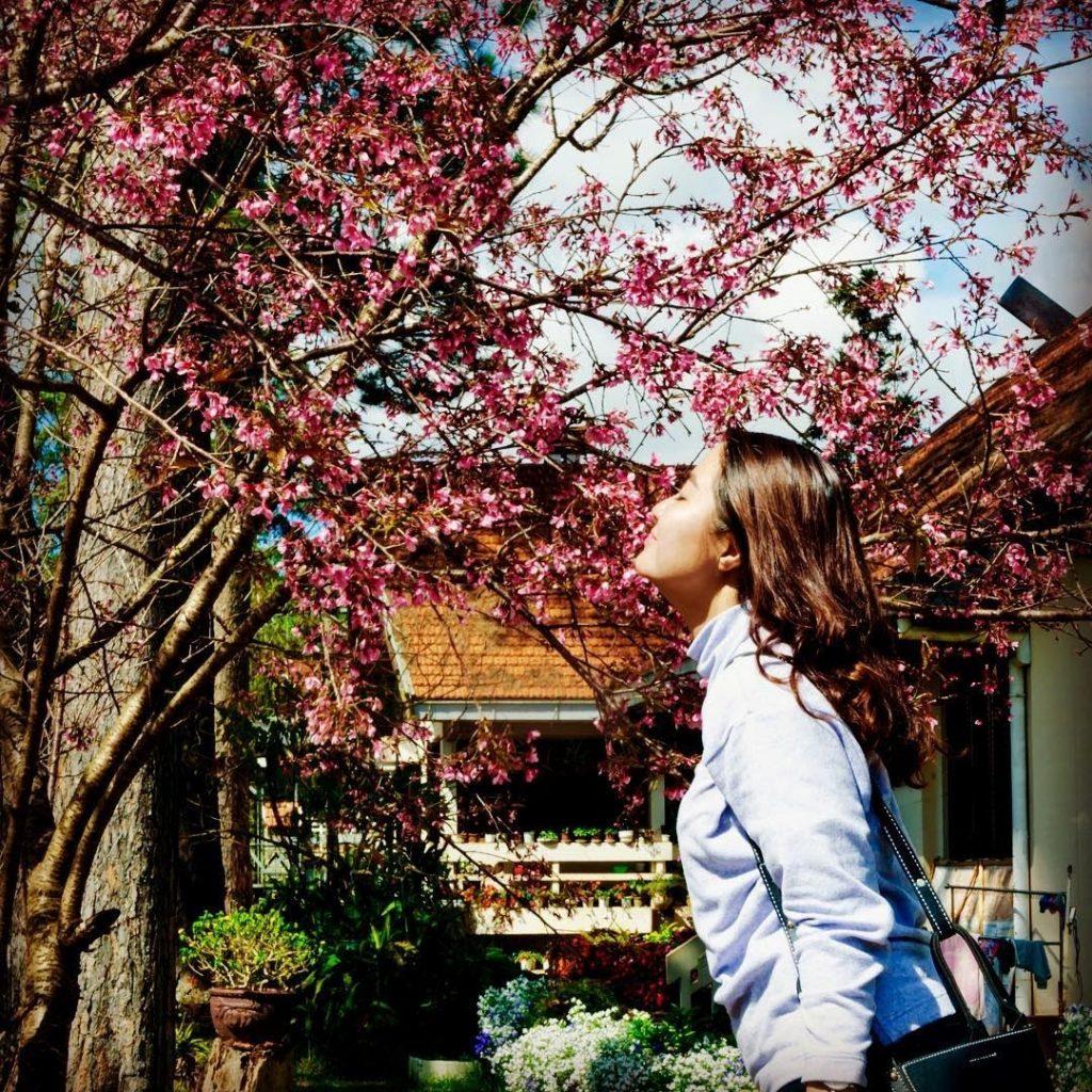 Những bức hình chụp với hoa mai anh đào thật đẹp