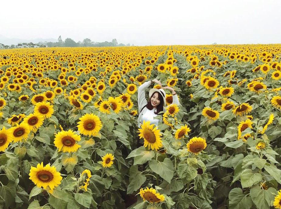 Cảm giác chỉ cần chạm nhẹ vào những bông hoa hướng dương thật tốt biết bao