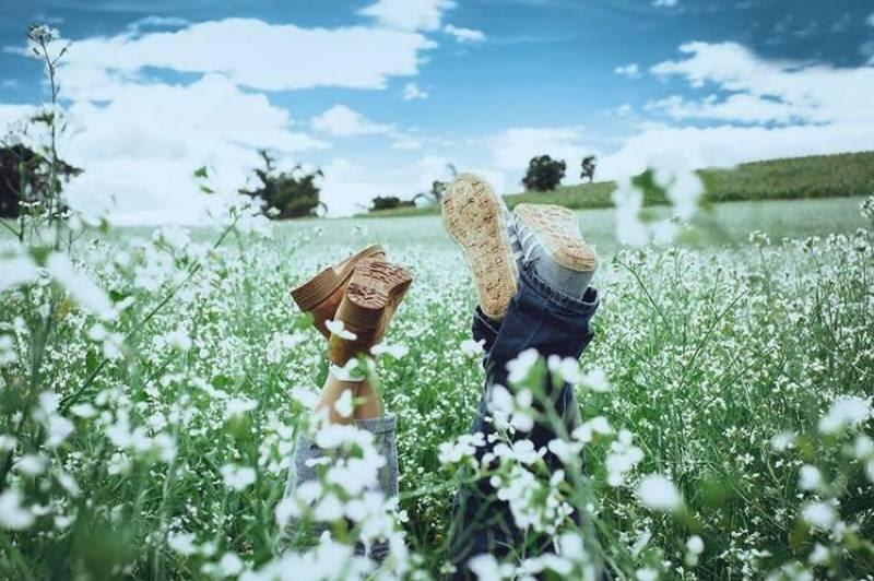 Mùa hoa cải trắng ngày ấy