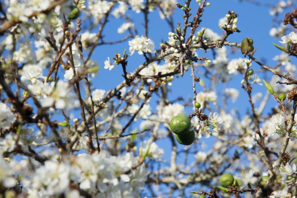 Hoa nở vào mùa xuân