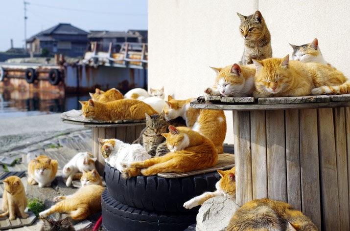 Mèo có thể nằm tắm nắng và ngủ ở mọi nơi…