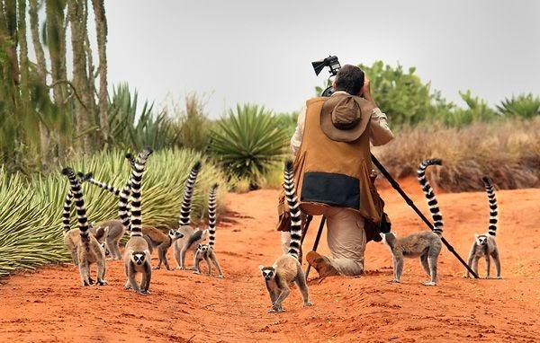 Madagascar là điểm thu hút rất nhiều nhà sinh vật học cùng các nhiếp ảnh gia.