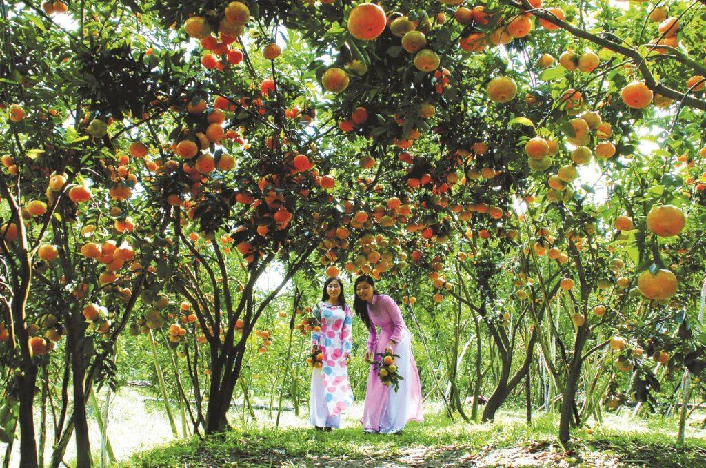 Đến với Cần Thơ thì không thể bỏ qua miệt vườn trái cây Mỹ Khánh đúng không nào?