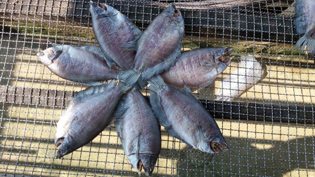 Cá sặc còn có các cách ăn khác như: nướng rồi chấm muối ớt hoặc chiên vàng nhắm bia lai rai cũng rất ngon