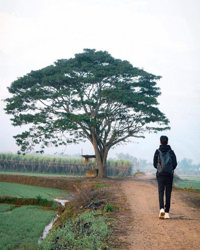 Cây cô đơn ở làng Hà Cảng