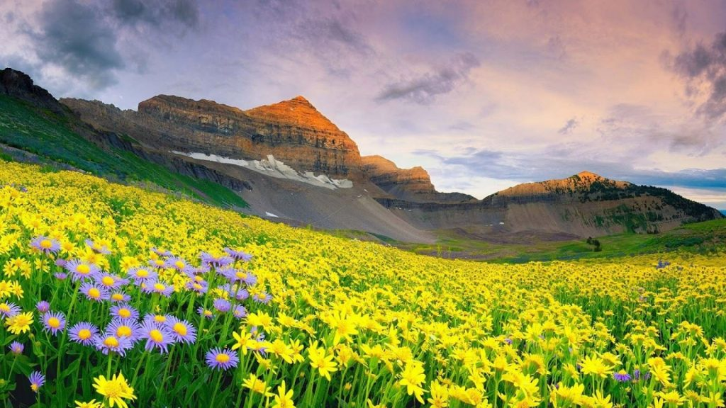 Vẻ đẹp tựa thiên đường của thung lũng hoa ở Ấn Độ