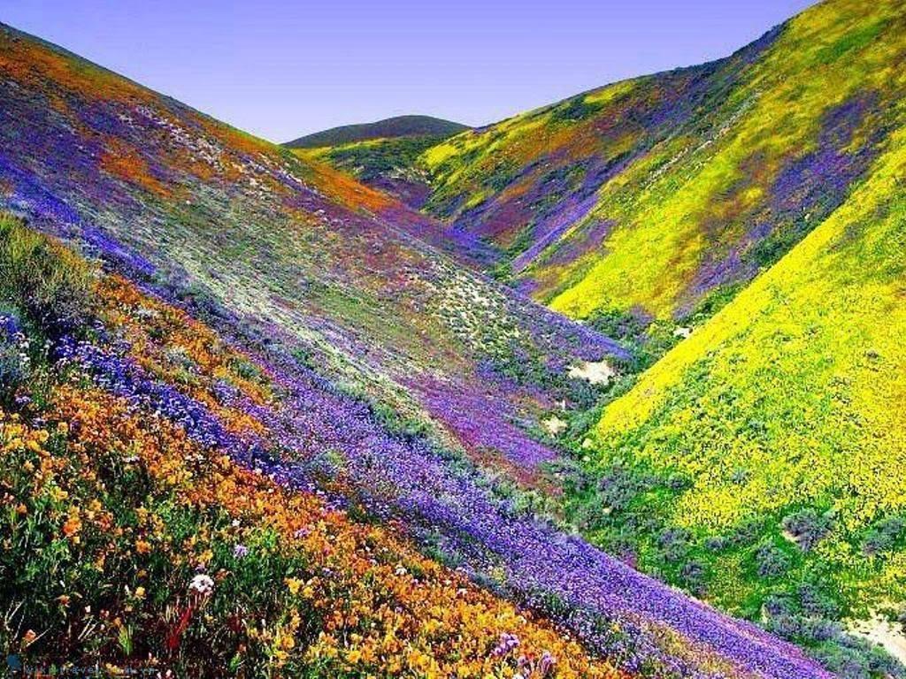 Đắm chìm trong cánh đồng hoa làm cho cảm giác còn hơn cả chill