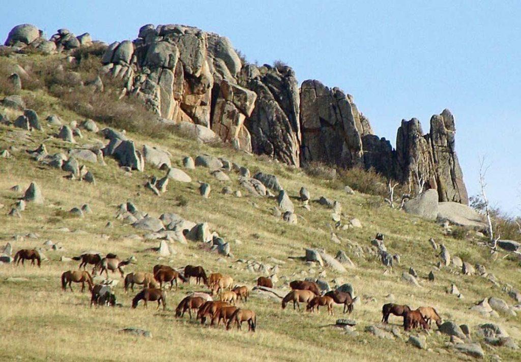 Hoặc lặng ngắm những đàn gia súc cũng là trải nghiệm du lịch Mông Cổ khó quên.