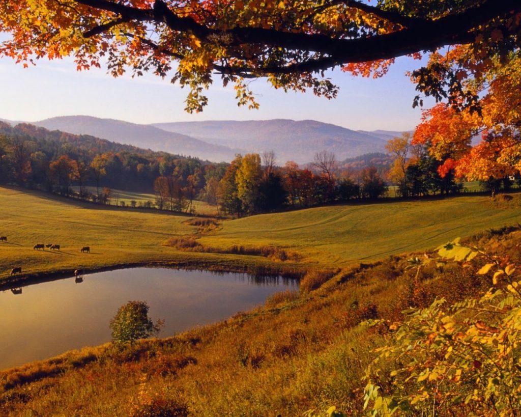 """Vẻ đẹp của """"Núi vàng"""" Altai mùa rừng thay lá."""