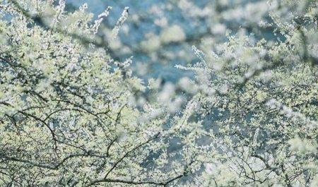 Mỗi mùa, Mộc Châu đều mang những vẻ đẹp khác nhau